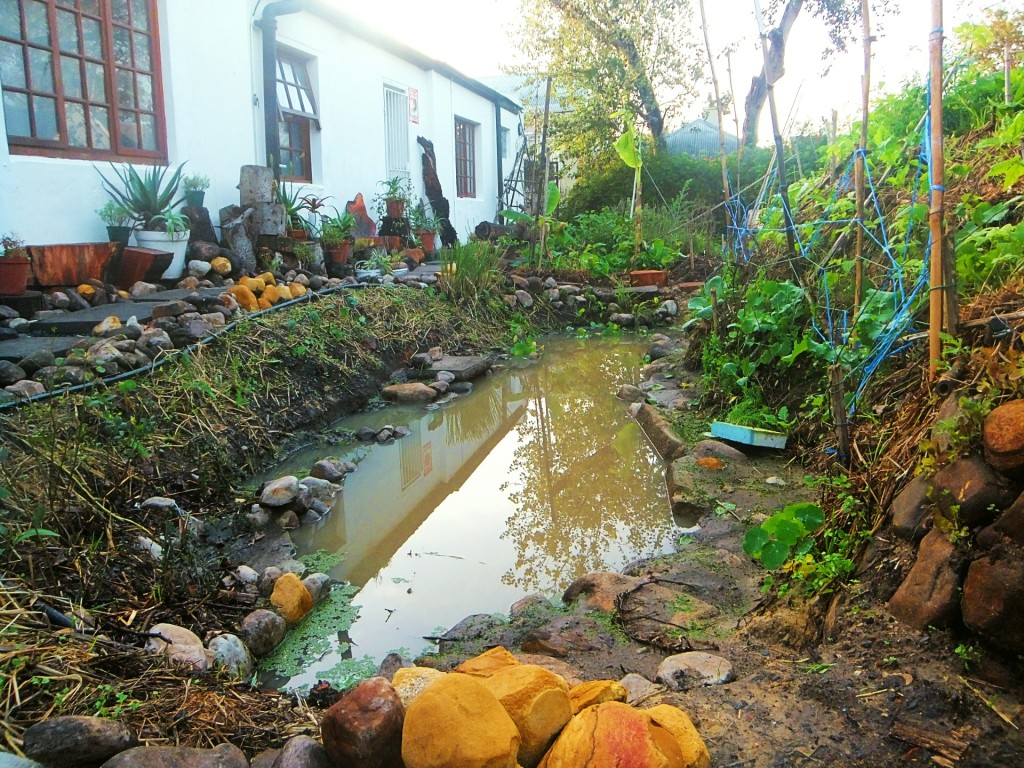 Permaculture zone 1. Grey-water pond next to hugel kultuur vegetable bed. Densely planted organic vegetables.
